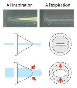Fonctionnement de la valve inspiratoire IsoBreath pour la chambre d'inhalation TipsHaler